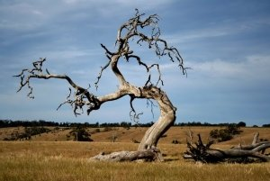 Dead_Tree_out_there_by_brooksta80